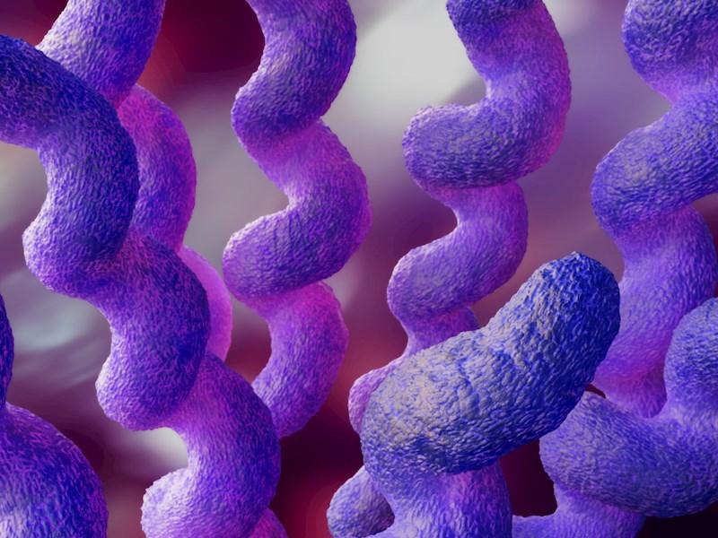 Ny undersøgelse fra Statens Serum Institut: Campylobacter kan også smitte ved seksuel kontakt