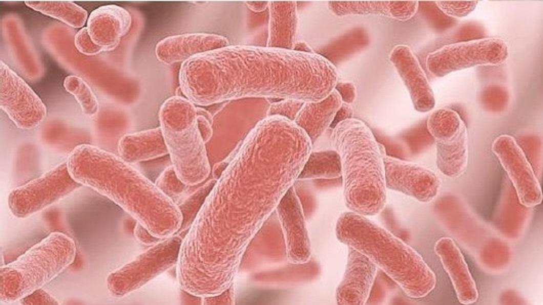 CPO-bakterier 02
