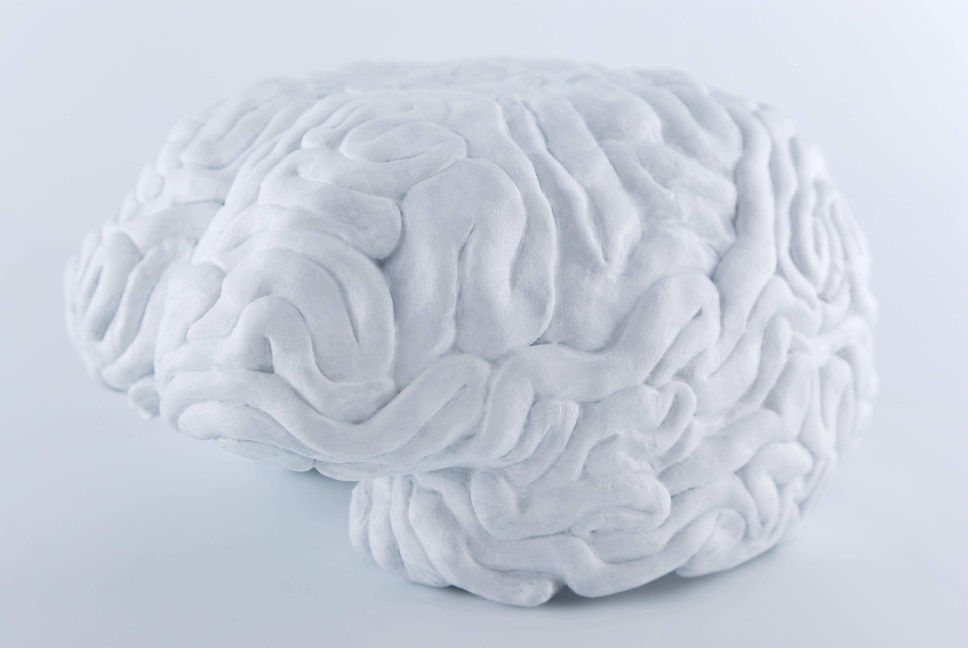 Hjerne 02