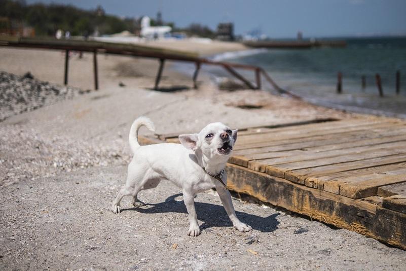 Hund på en strand