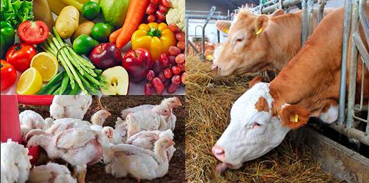 Collage med kyllinger, frugt og grønt samt køer