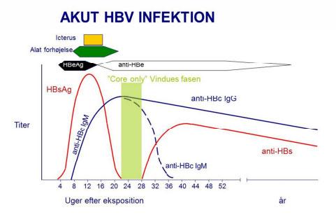Akut HBV infektion